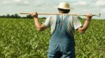 Şehir Çiftçiliği Nedir (Kentsel Tarım Nedir)
