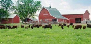 Hayvan Çiftliği Nasıl Açılır? Ne Gerekir?